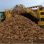 Álava inicia su campaña remolachera con una previsión de aforo de 135.000 t