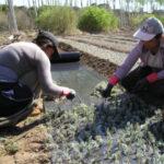 Reguladas las subvenciones para potenciar el emprendimiento de las mujeres rurales