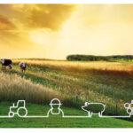 UE: Se espera una menor producción de cereales y de azúcar pero mayor de carnes, leche y aceite de oliva.