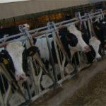 La producción de leche en la UE en 2018 podría subir solo un 0,8%