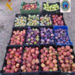 Sorprenden a 39 personas con 4.500 kg de fruta robada