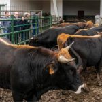 Cantabria convoca ayudas a las asociaciones de ganaderos para fomentar razas autóctonas