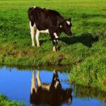 La CE insta a España e Italia a cumplir la directiva nitratos