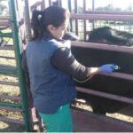 Andalucía designa a Recevet como la plataforma de receta oficial veterinaria